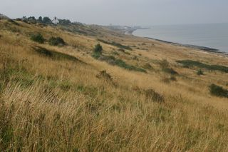 Rough grassland on Kent coast
